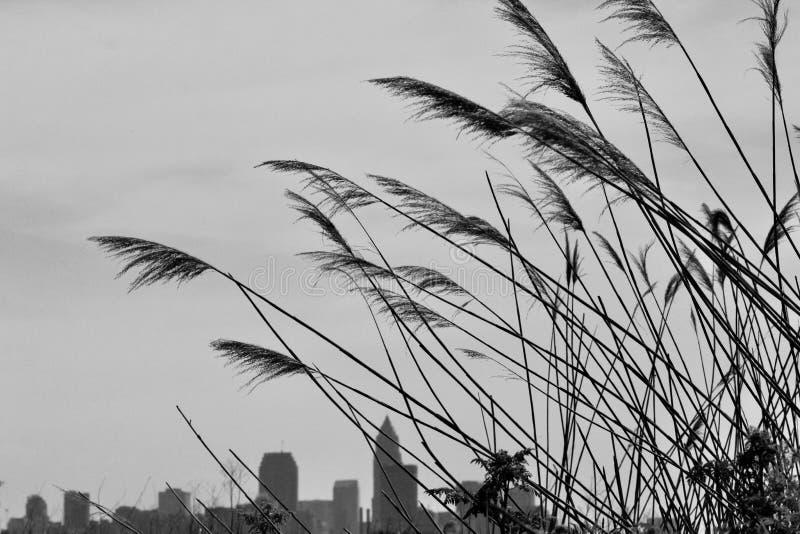 Ett fält på Cleveland Lakefront Nature Preserve arkivfoto