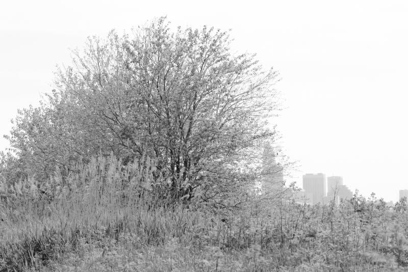 Ett fält på Cleveland Lakefront Nature Preserve arkivbilder