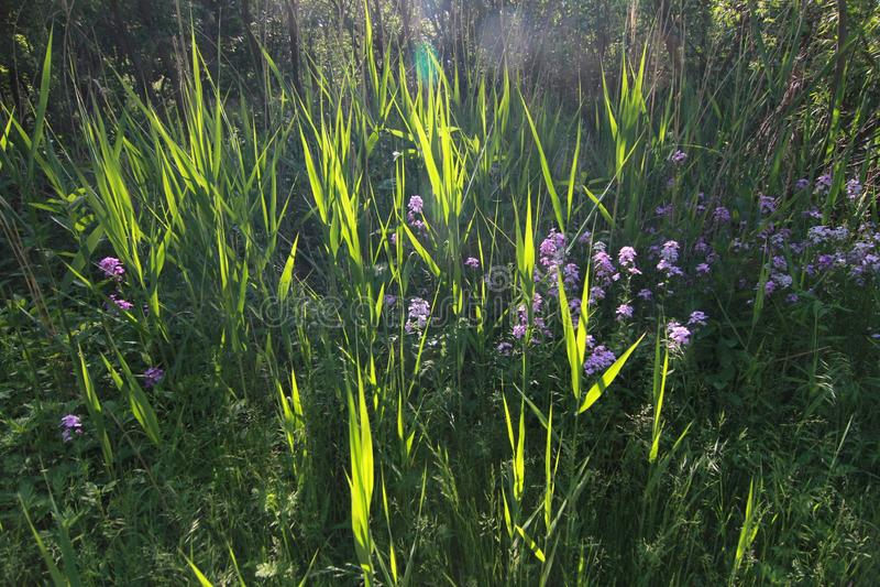 Ett fält på Cleveland Lakefront Nature Preserve royaltyfri bild