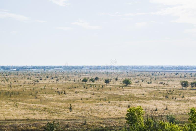 Ett fält som ingenting växer i utom träd arkivbilder