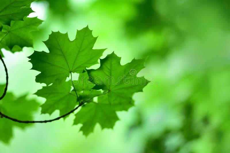 Ett försiktigt fokuserat fotografi av lövverket av träd royaltyfria foton