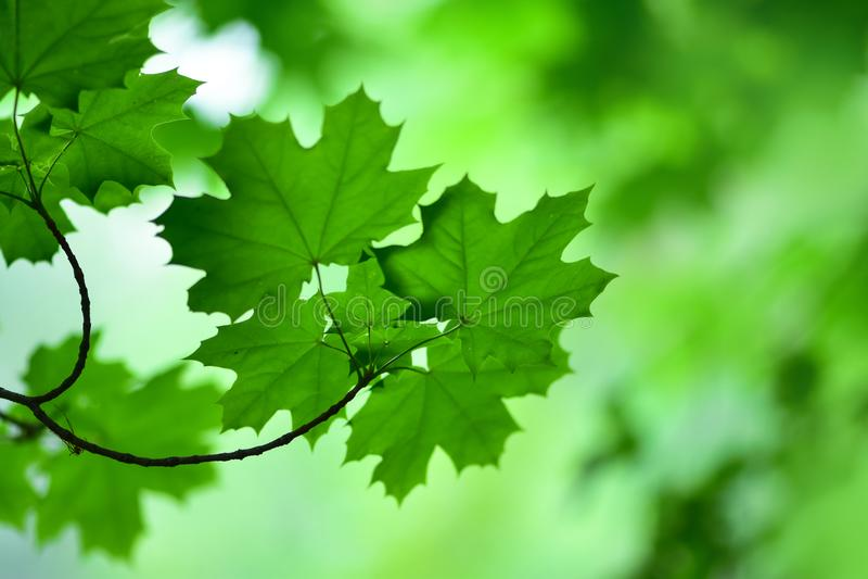 Ett försiktigt fokuserat fotografi av lövverket av träd royaltyfria bilder