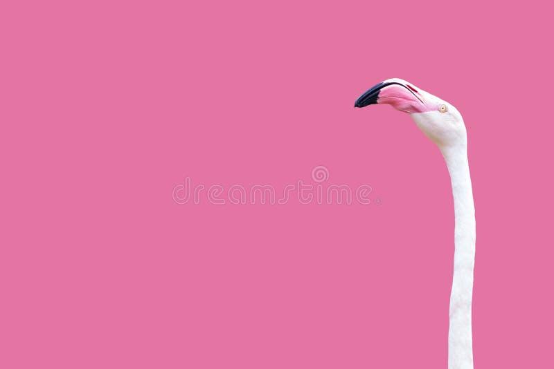 Ett flamingohuvud arkivfoton