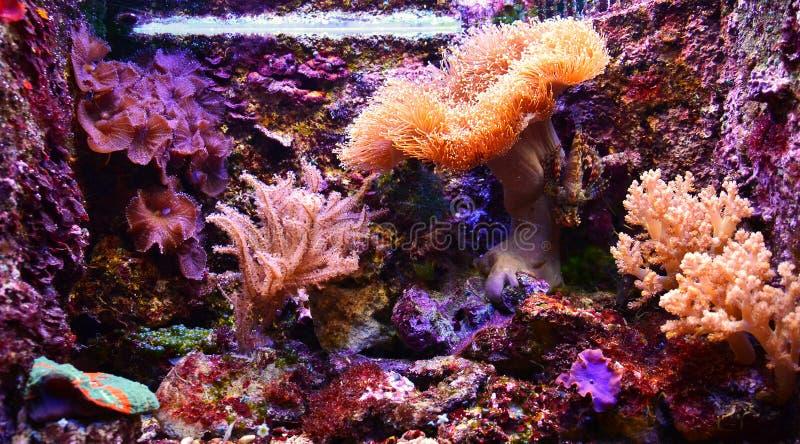 Älskvärt akvarium arkivfoto