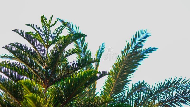 Ett fotografi av palmträd och blå himmel som backgound royaltyfria bilder