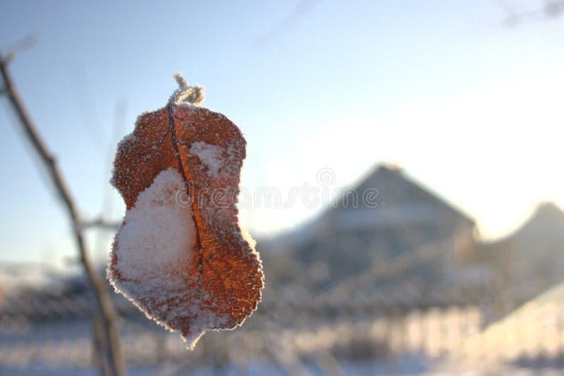 Ett gammalt blad för äppleträd som täckas med snö royaltyfri bild