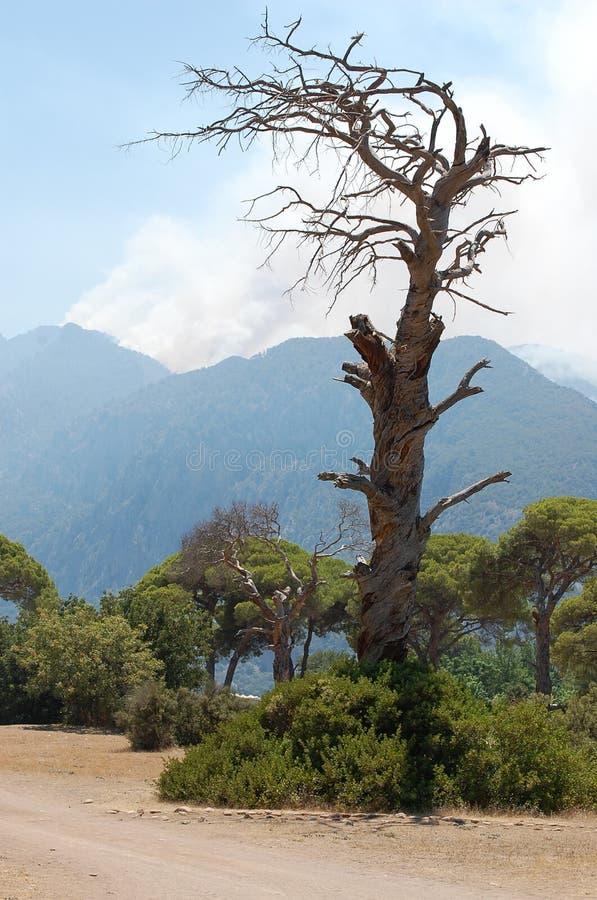 Ett gammalt ensligt träd i bergen som är höga i kalkon royaltyfri fotografi
