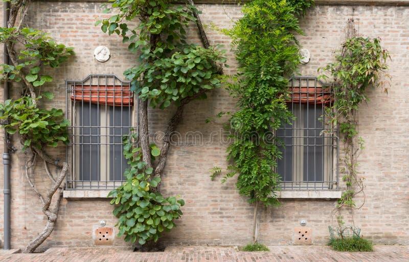 Ett gammalt hus med cilmbing växter i en trädgård i Italien royaltyfria bilder