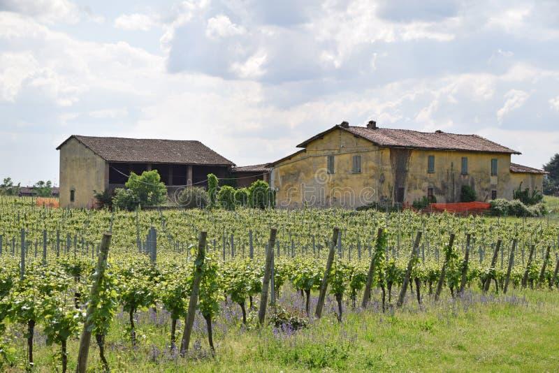 Ett gammalt lantbrukarhem och dess vingård i den Brescia bygden - Italien arkivbild