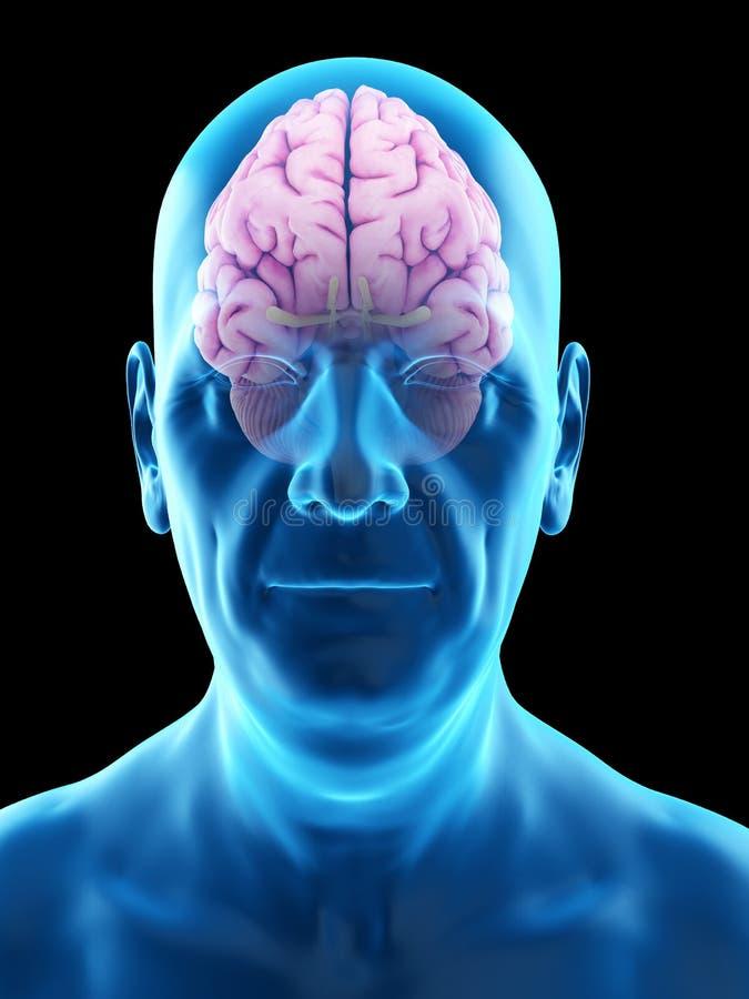 Ett gammalt mans hjärnan royaltyfri illustrationer