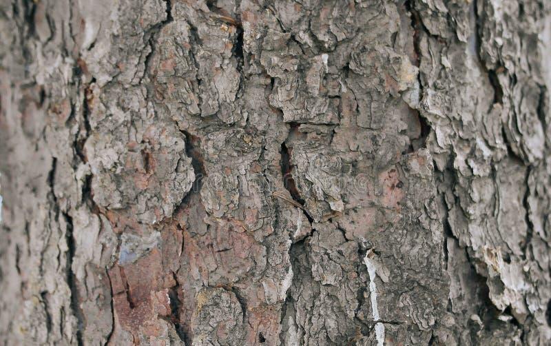 Ett grått slut för trädskäll upp arkivfoto