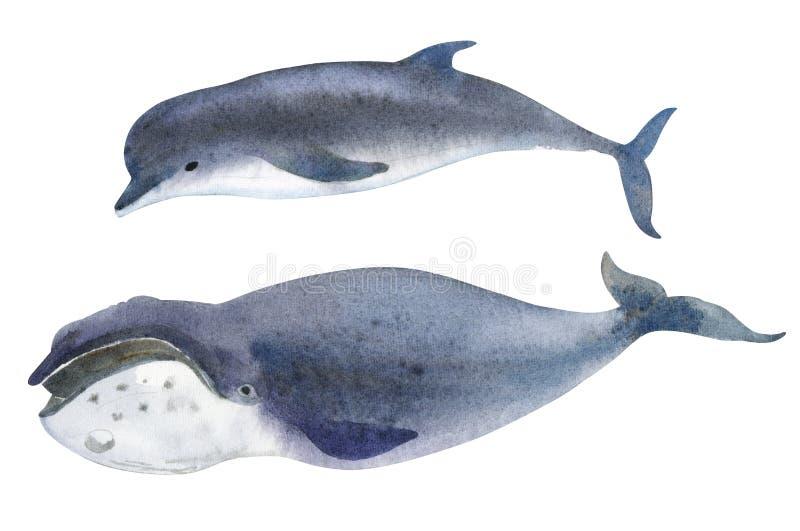 Ett grått val och en delfin Färgstänk skissar av norr djur för havet stock illustrationer