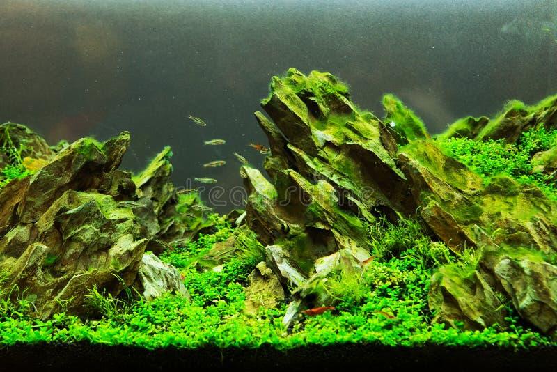 Ett grönt härligt akvarium arkivbilder