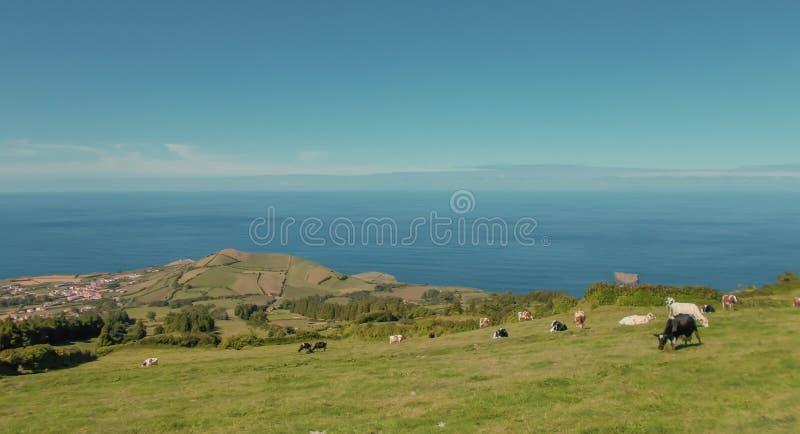Ett grönt landskap av Azoresna arkivfoton