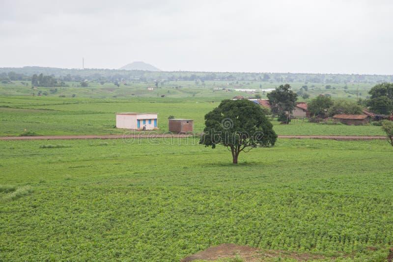 Ett grönt träd och litet kojor och hem i gröna fält royaltyfria bilder