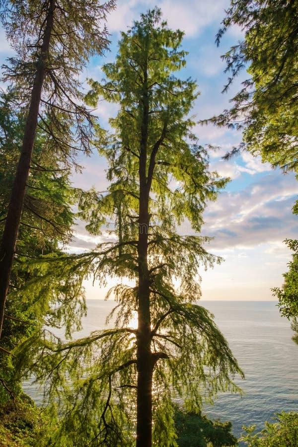 Ett grönt träd på kust arkivfoton