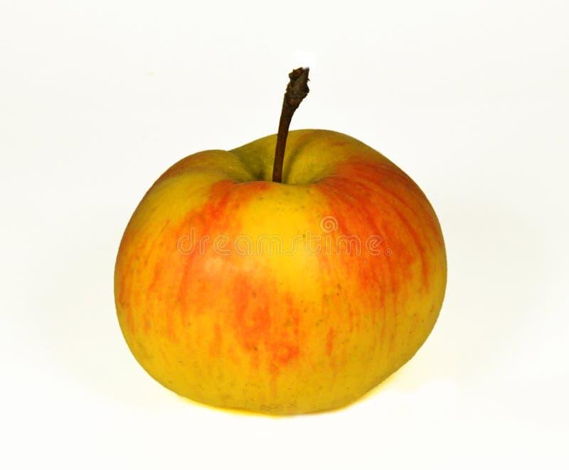 Ett guling-rött äpple arkivbild