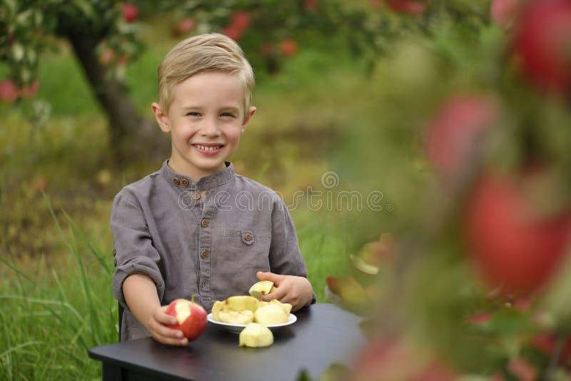 Ett gulligt och att le pojken väljer äpplen i en äpplefruktträdgård och innehav ett äpple arkivfoton