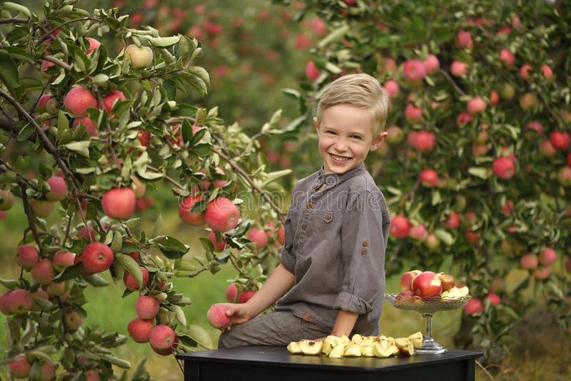 Ett gulligt och att le pojken väljer äpplen i en äpplefruktträdgård och innehav ett äpple arkivbild