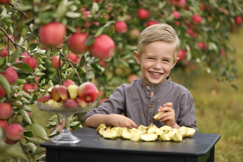 Ett gulligt och att le pojken väljer äpplen i en äpplefruktträdgård och innehav ett äpple royaltyfri foto
