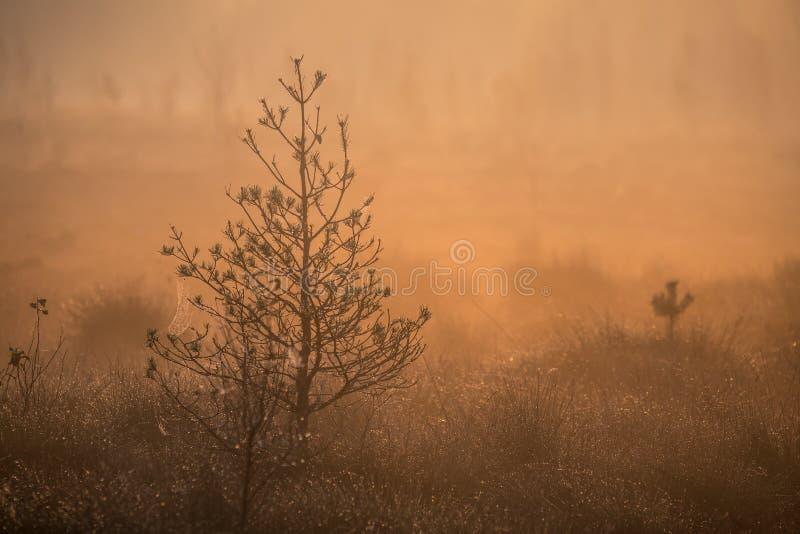 Ett härligt dimmigt landskap av en nedgång i våtmarker Höstlandskap i träsk, mjukt utbrett ljus, dimma och ogenomskinlighet royaltyfri foto