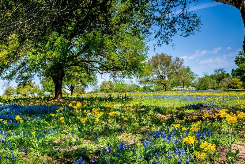 Ett härligt fält som filt med olika Texas Wildflowers arkivfoton