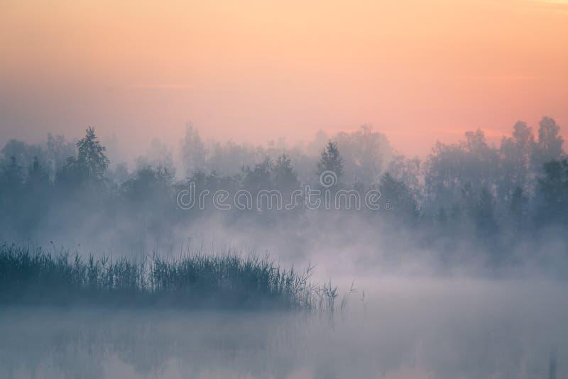 Ett härligt färgrikt landskap av ett dimmigt träsk under soluppgången Atmosfäriskt stillsamt våtmarklandskap med solen arkivbilder