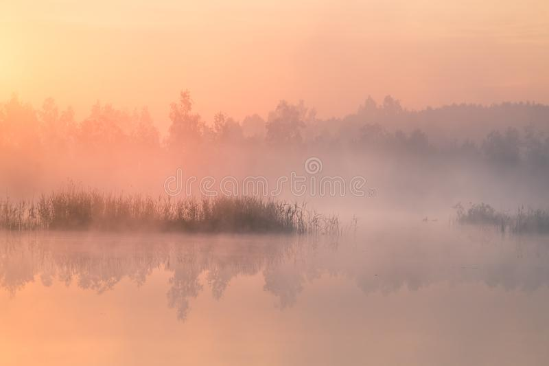 Ett härligt färgrikt landskap av ett dimmigt träsk under soluppgången Atmosfäriskt stillsamt våtmarklandskap med solen royaltyfria foton