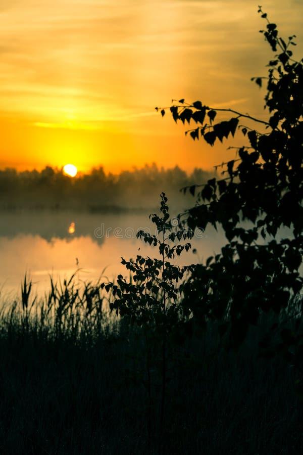Ett härligt färgrikt landskap av ett dimmigt träsk under soluppgången Atmosfäriskt stillsamt våtmarklandskap med solen royaltyfri foto