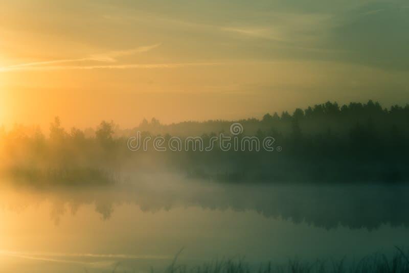 Ett härligt färgrikt landskap av ett dimmigt träsk under soluppgången Atmosfäriskt stillsamt våtmarklandskap med solen fotografering för bildbyråer