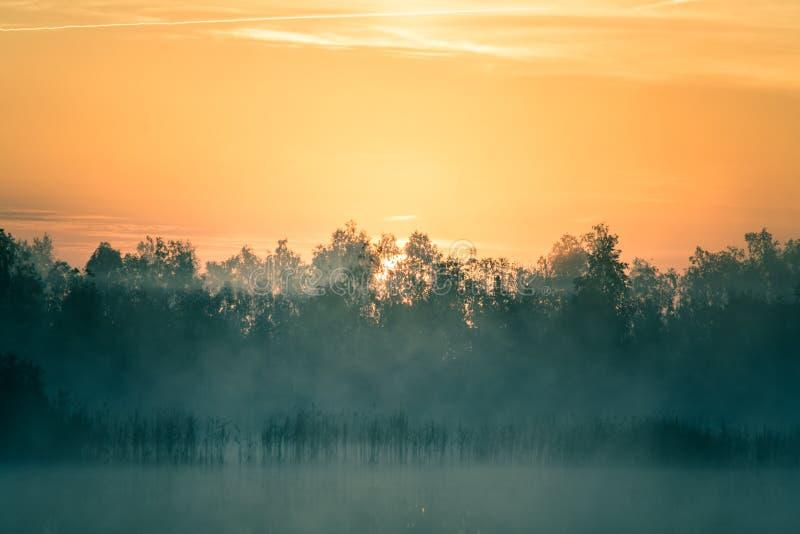 Ett härligt färgrikt landskap av ett dimmigt träsk under soluppgången Atmosfäriskt stillsamt våtmarklandskap med solen royaltyfria bilder