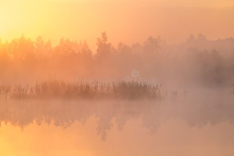 Ett härligt färgrikt landskap av ett dimmigt träsk under soluppgången Atmosfäriskt stillsamt våtmarklandskap med solen royaltyfri bild