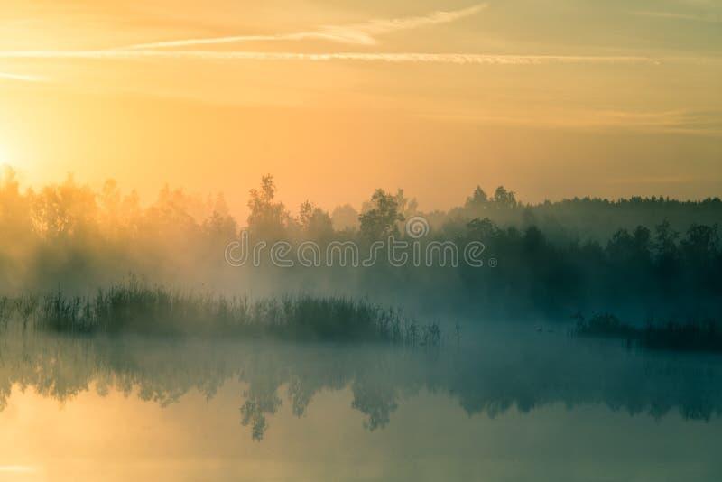 Ett härligt färgrikt landskap av ett dimmigt träsk under soluppgången Atmosfäriskt stillsamt våtmarklandskap med solen royaltyfri fotografi