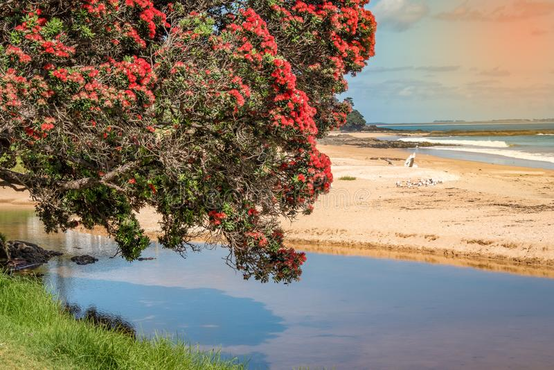 Ett härligt foto av ett pohutukawaträd som hänger över vattnet arkivfoto