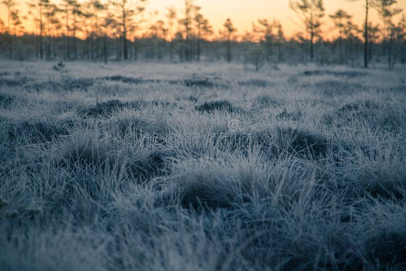 Ett härligt morgonlandskap i ett djupfryst träsk Ljus färgrik soluppgång i djupfrysta våtmarker arkivbilder