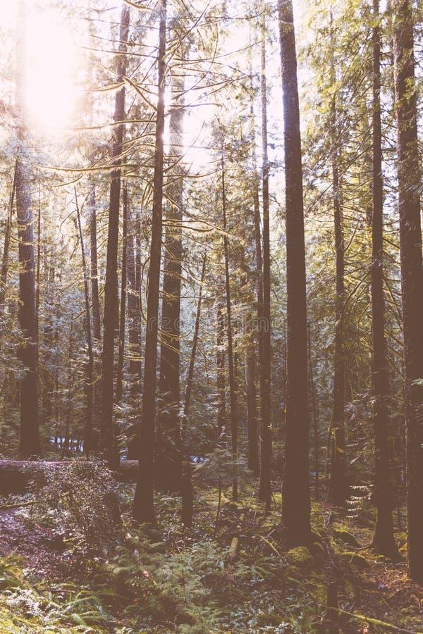 Ett härligt skott av en skog arkivbild