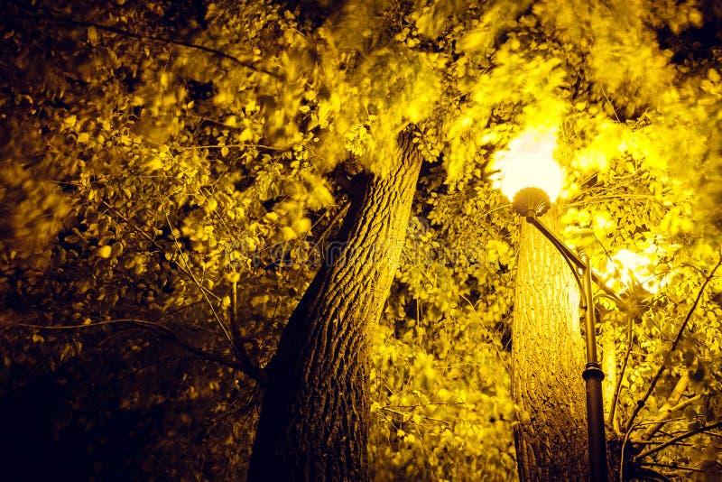Ett härligt träd markeras av en lykta i parkerar royaltyfri fotografi