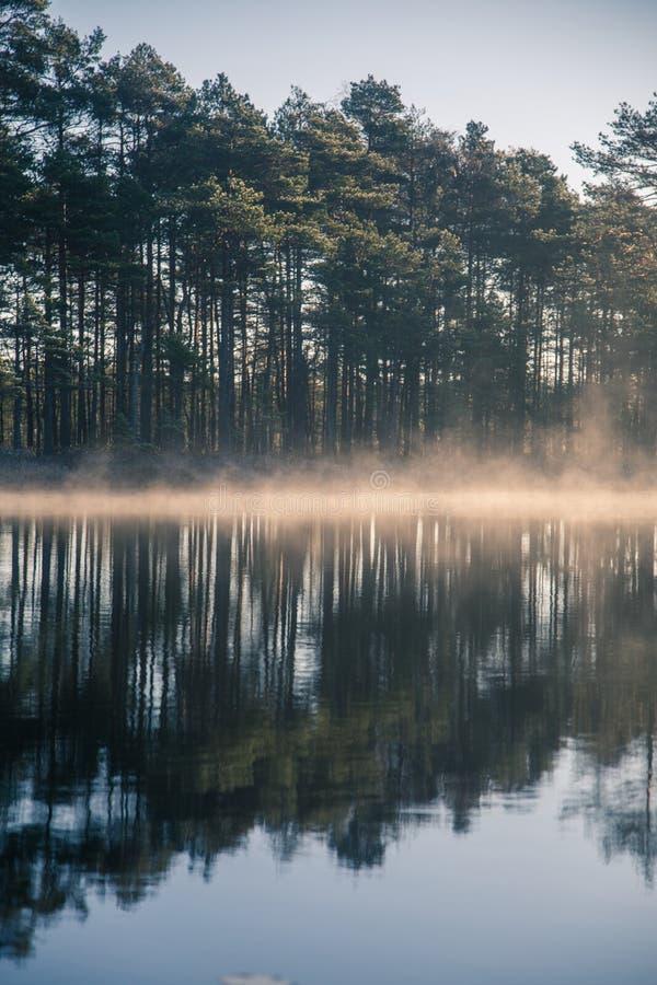 Ett härligt träskdamm med en lyftande mist under soluppgången Sumpmark i våtmarker för en frowen i höst Ljust ljus med den flar s royaltyfria bilder