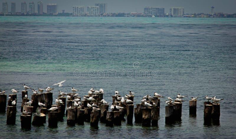 Ett härligt vårlandskap på stranden med en koloni av fåglar Svanar kormoran, fiskmåsar som kopplar av på trät på stranden La royaltyfria foton