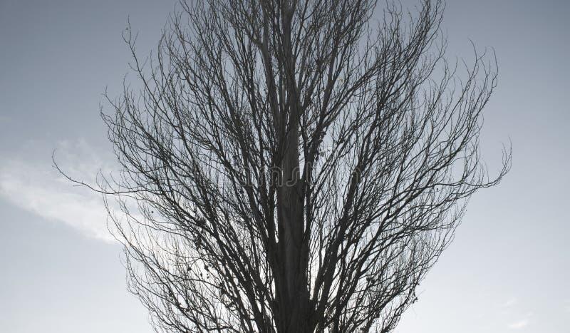 ett högväxt träd i höst arkivfoto