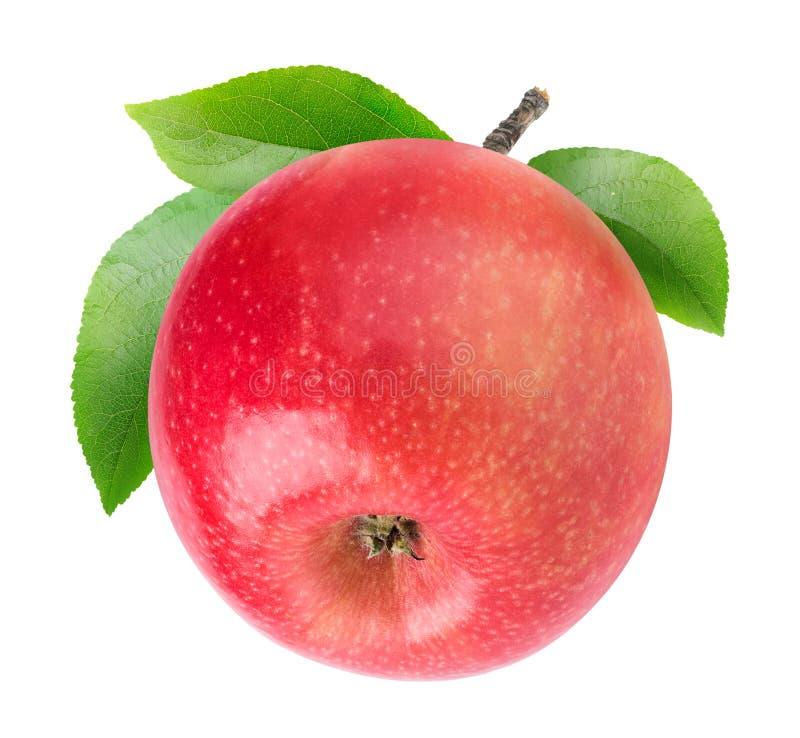 Ett isolerat äpple med stammen fotografering för bildbyråer