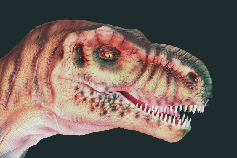 Ett kött som äter Giganotosaurusdinosaurien mot svart royaltyfria foton