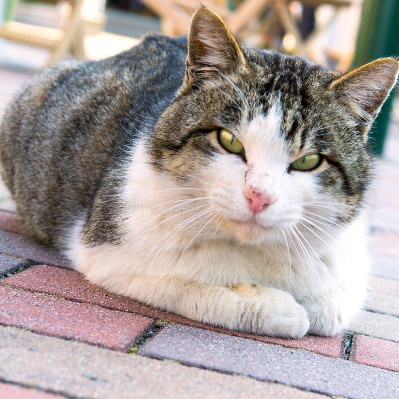 Ett kattsammanträde för två signal på trottoar i Japan royaltyfri bild