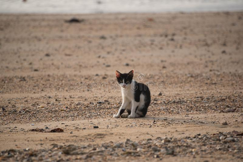 Ett kattsammanträde på stranden arkivfoto