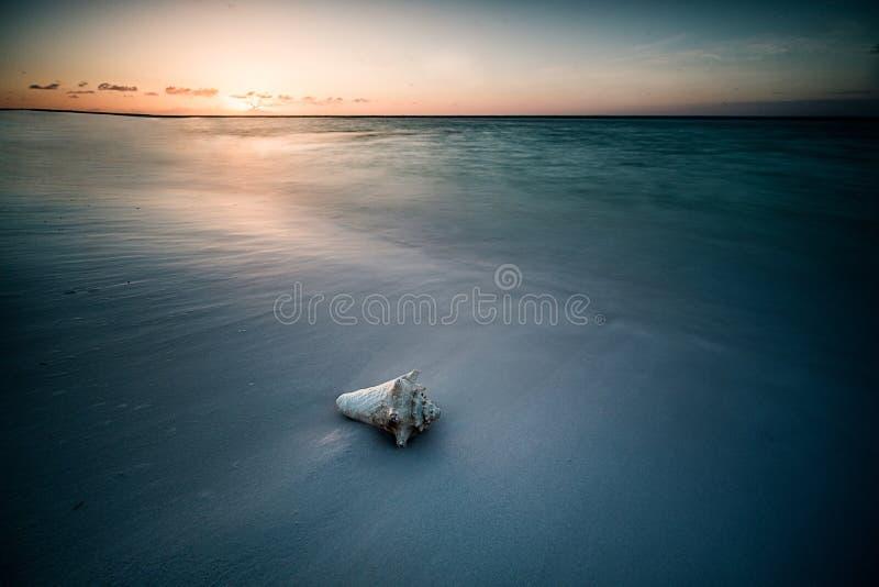 Ett krabbaskal på stranden av ett hav arkivfoton
