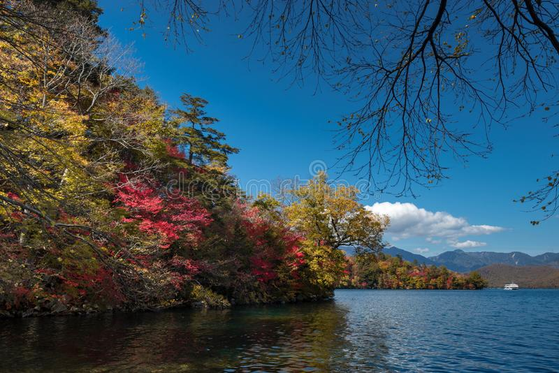Ett kryssningfartyg tar turist- för att se höstfärg i Chuzenji sjön med turkosyttersida av vatten och färgrikt av träd med guling royaltyfria bilder