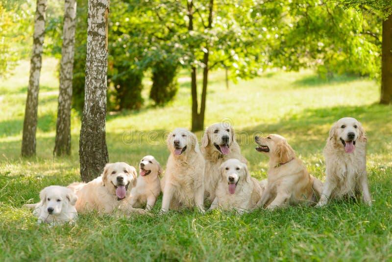 Ett långt rått av hundkapplöpning fotografering för bildbyråer