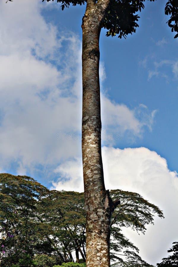 Ett långt träd arkivbild