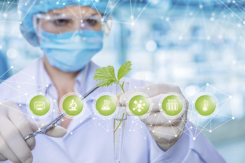 Ett laboratorian håller en grodd i ett labbrör och erhåller prövkopior med den medicinska klämman på symbolförgrund arkivbilder