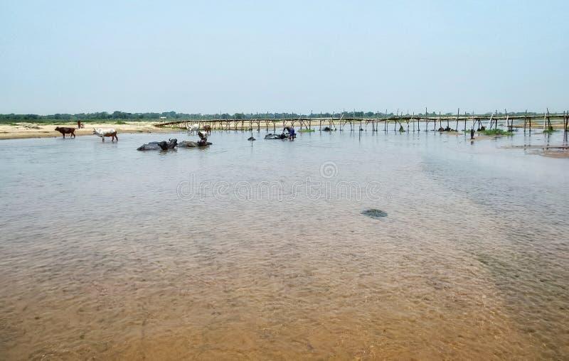 ett landskap av en flod var några personer ger ett bad till deras nötkreatur royaltyfri foto